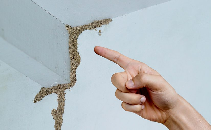 How You Can Make Sure That The Job Is Going To Get Done Once And For All When Looking Into Pest Control In Melbourne