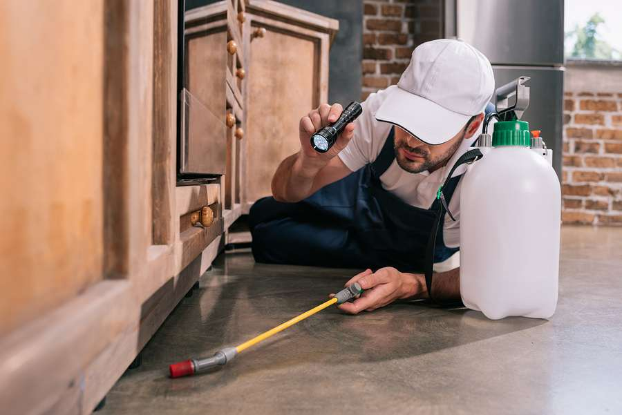 Specialist offering pest control in Melbourne